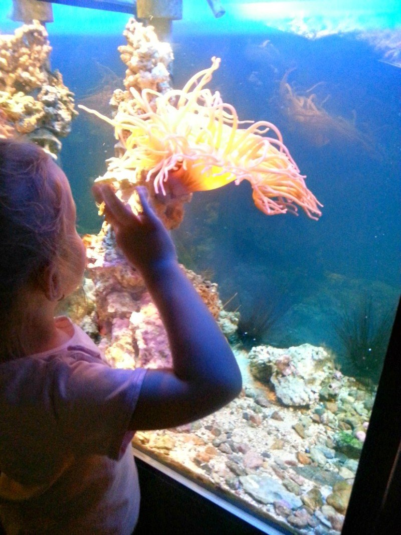 Aquaria Museum Stockholm