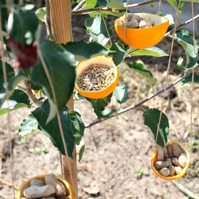 Easy DIY bird feeders using orange peel