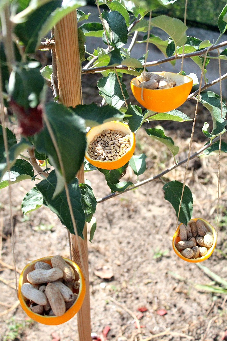Cheap bird feeders
