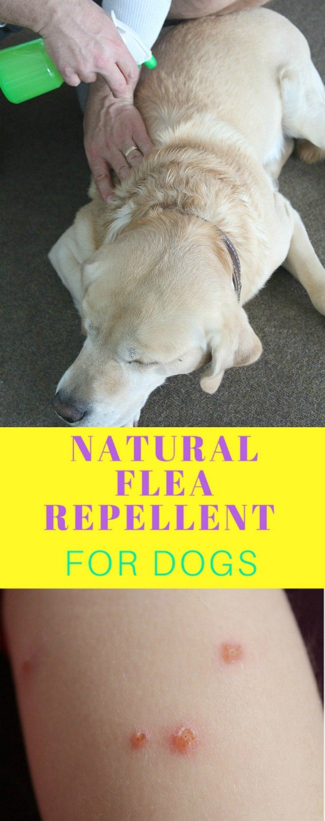 DIY Flea repellent for dogs