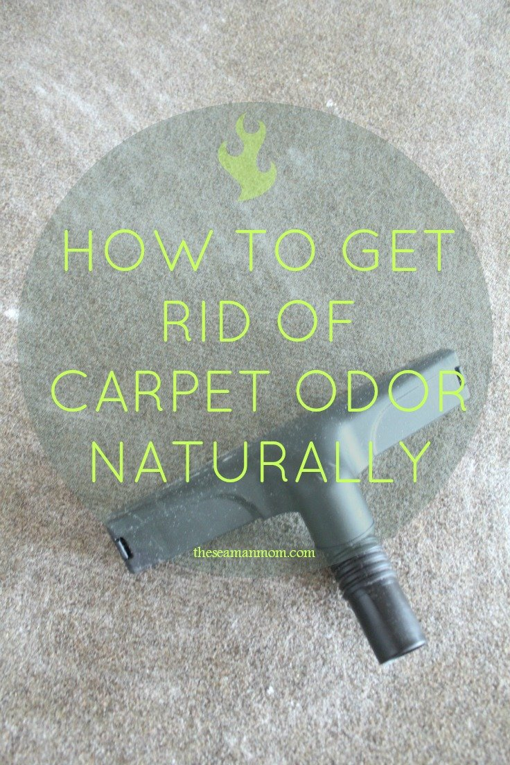 Diy Carpet Deodorizer The Best Pet Odor Eliminator