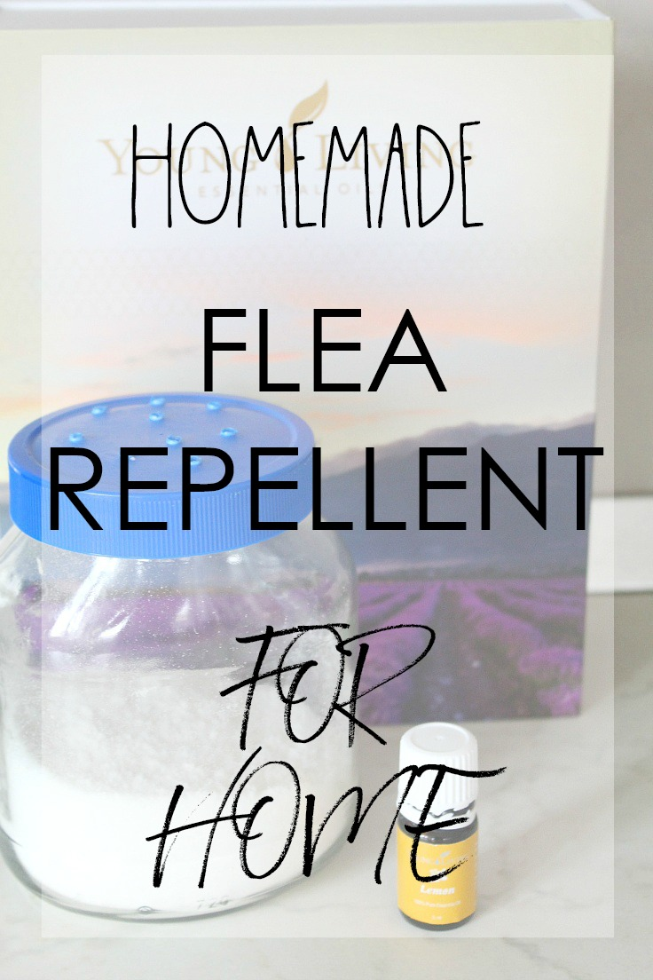 Homemade flea killer