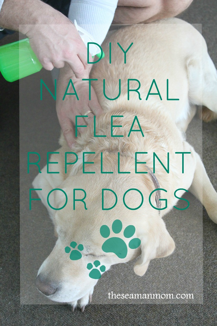 DIY flea repellent for dogs
