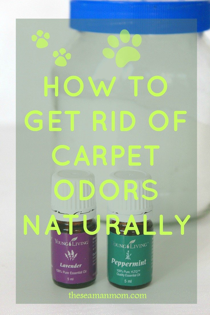 How to get rid of carpet odor