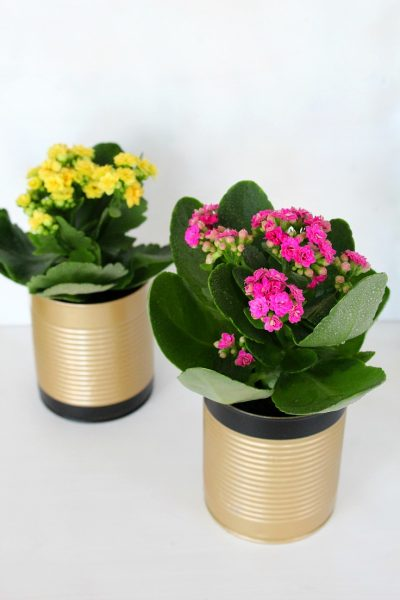 DIY recycled tin can flower pots