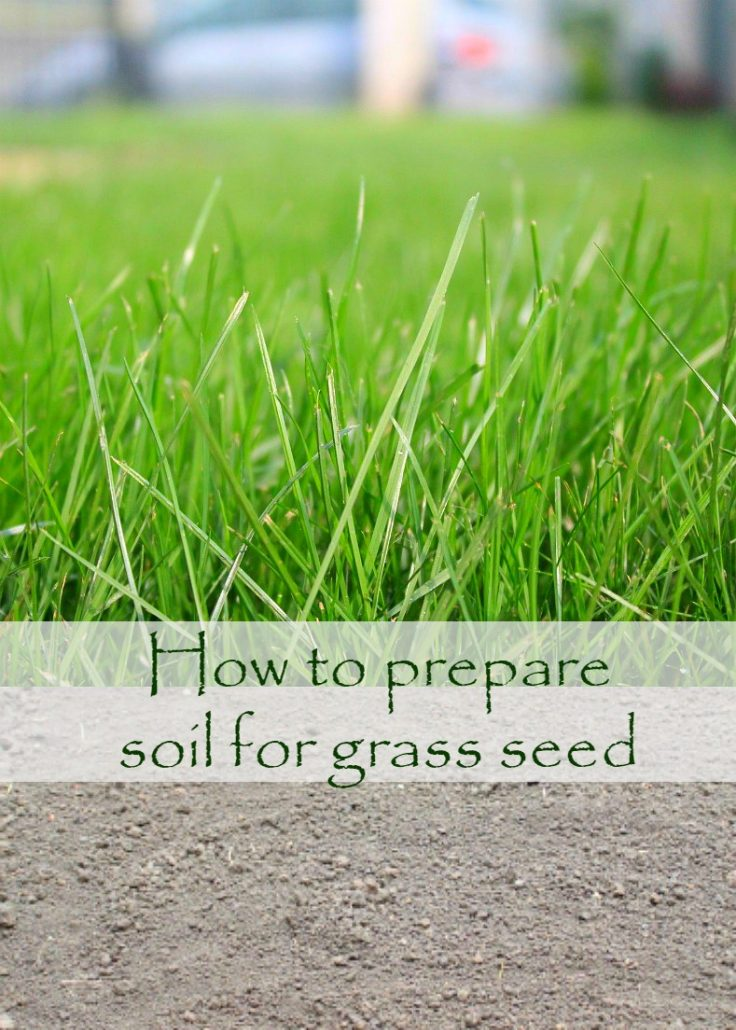 Image of turf grown from seeds following the tips in the article on How to prepare soil for grass seed