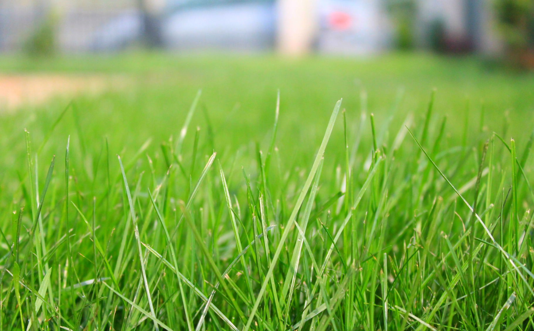 How to prepare soil for grass seed important steps for a for Lawn topsoil