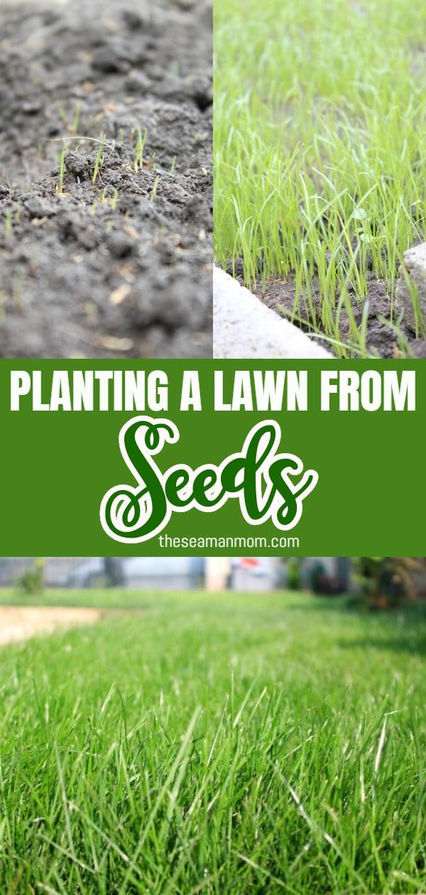 Growing grass from seed is the least expensive way to transform your home or garden. Here you'll learn how to plant a lawn in just a few easy steps! via @petroneagu