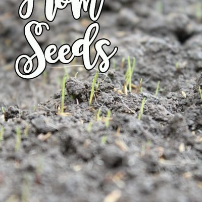 Tips for growing grass from seed