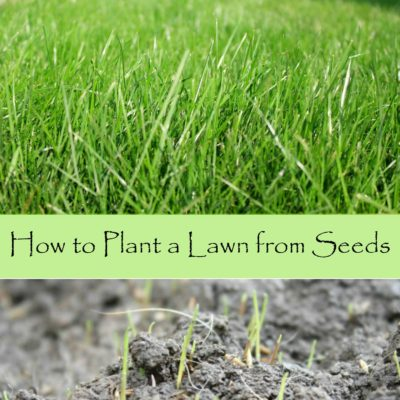 How to plant a lawn from seeds
