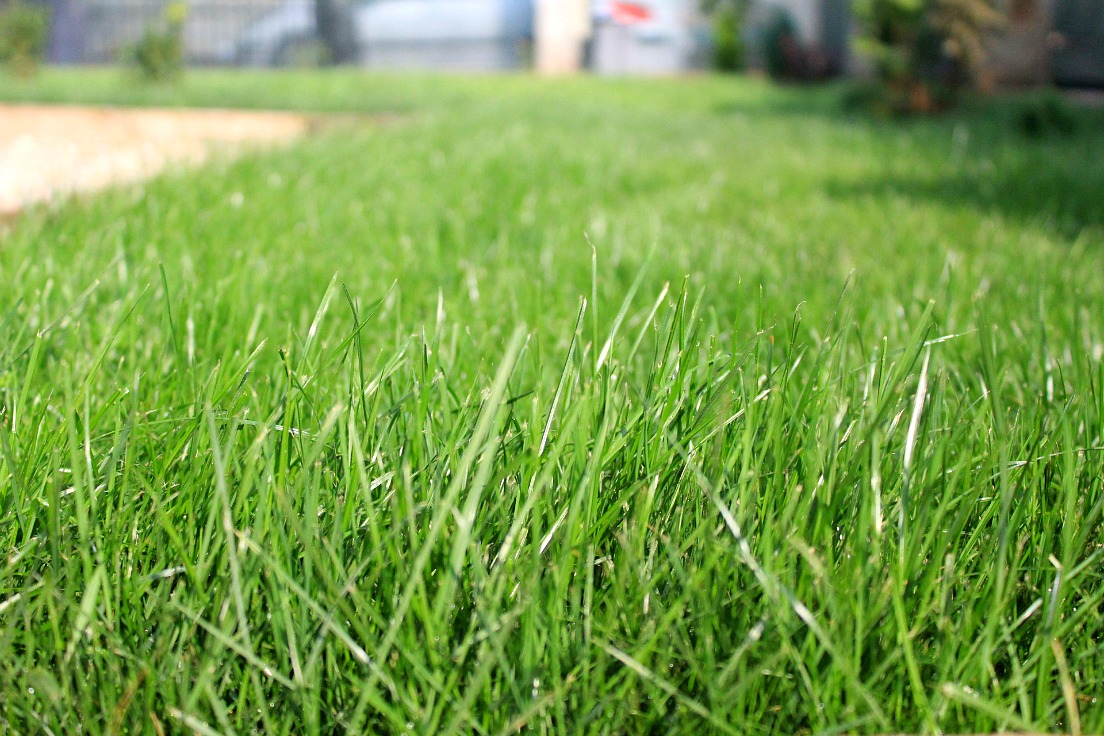 Here S How To Plant A Lawn From Seeds