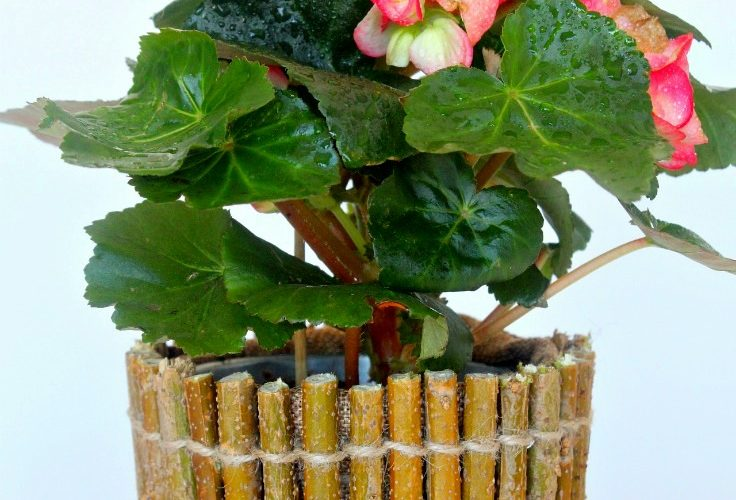 Rustic Twig Flower Pot