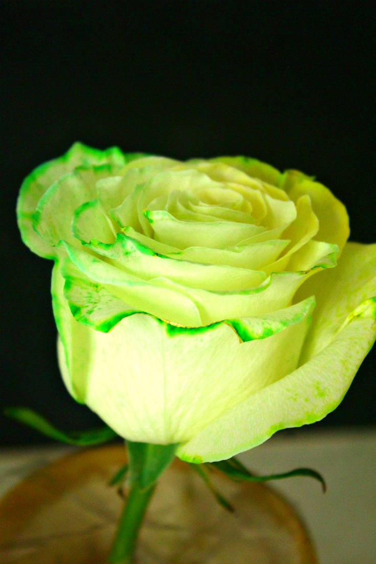 Image of tie dye roses