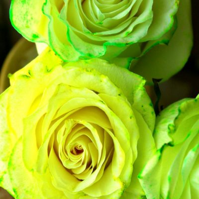 Easy Way To Dye Roses At Home