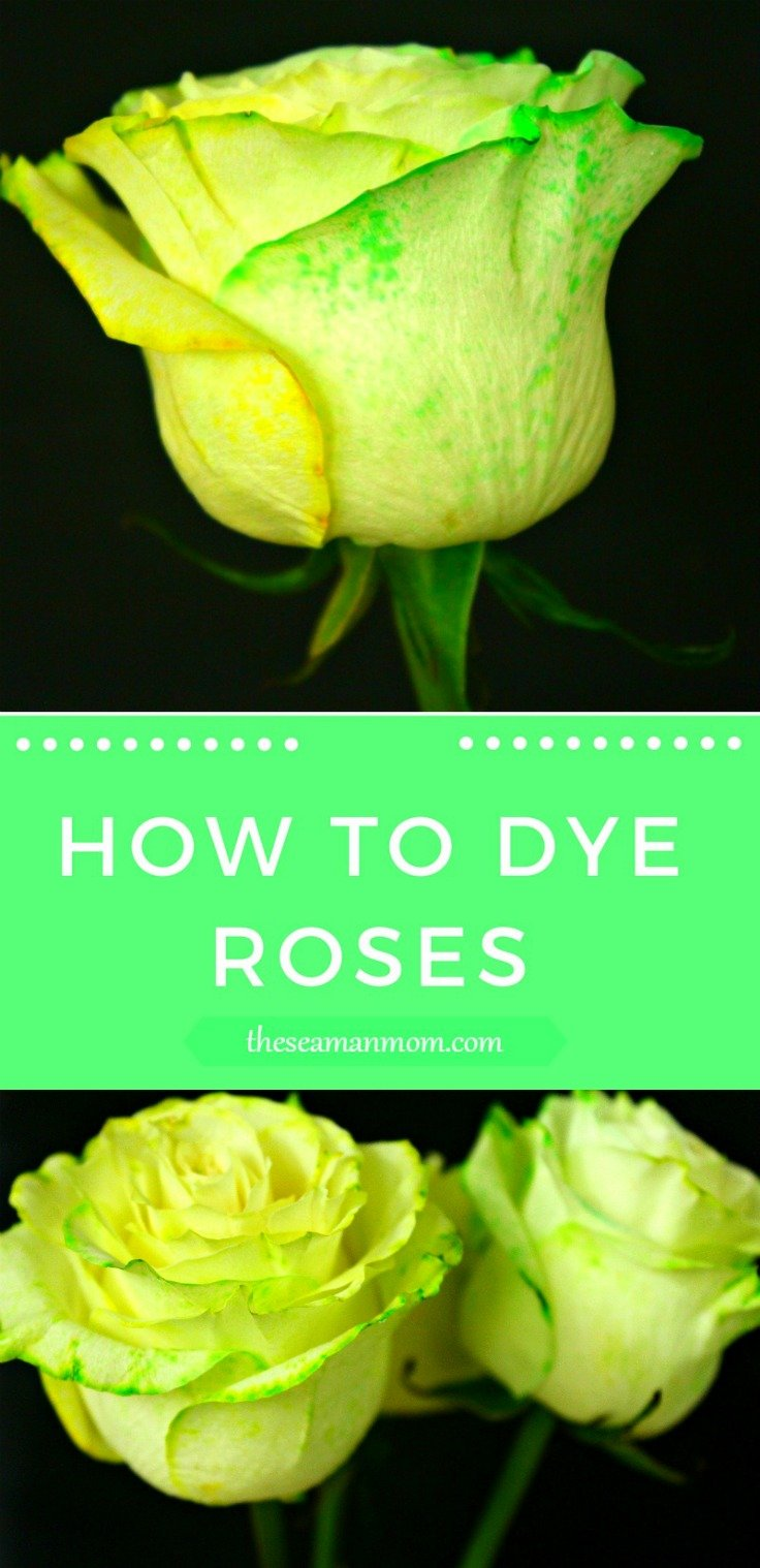 How To Dye Roses At Home Easy Peasy Diy With Food Coloring
