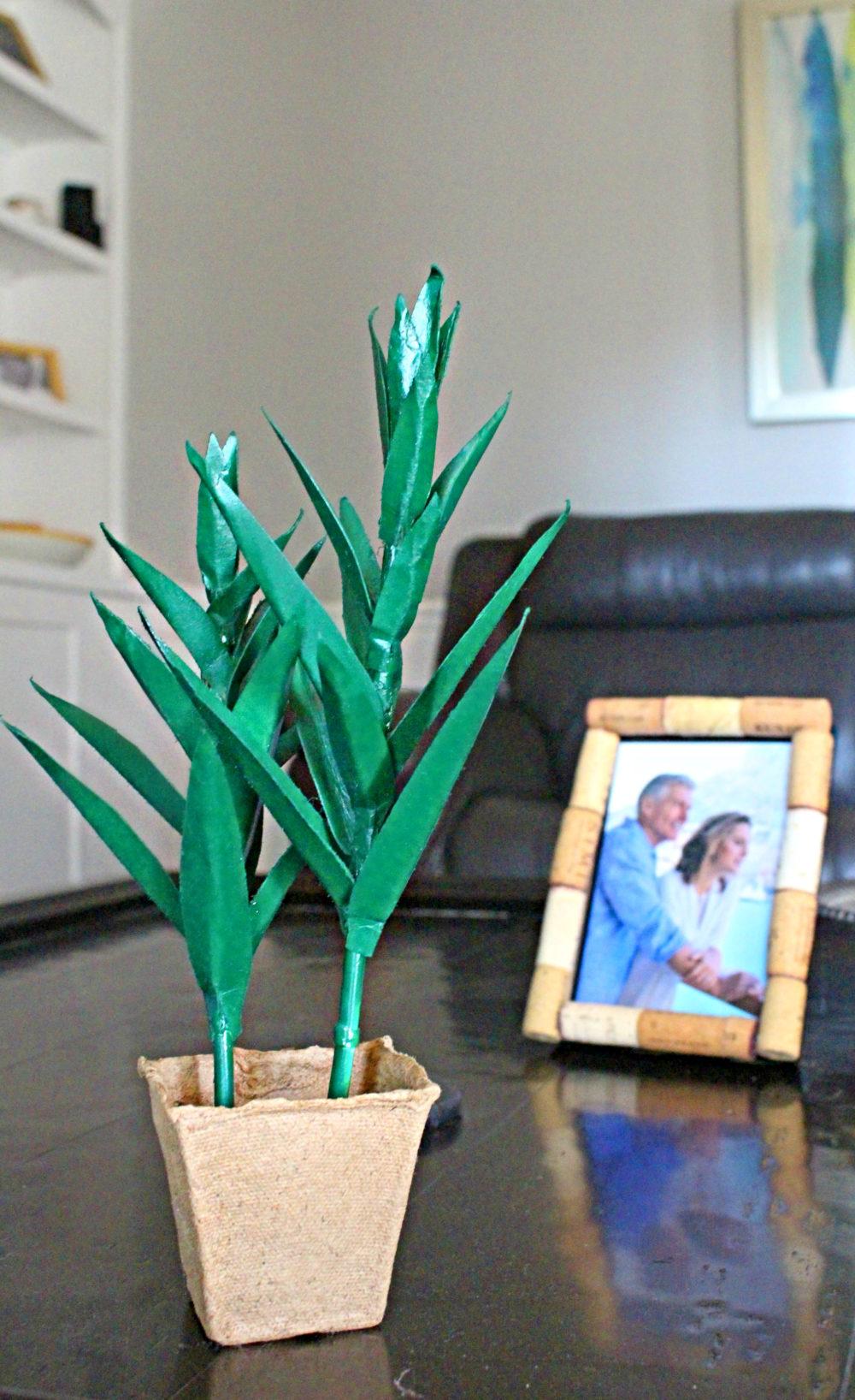 diy aloe vera plant