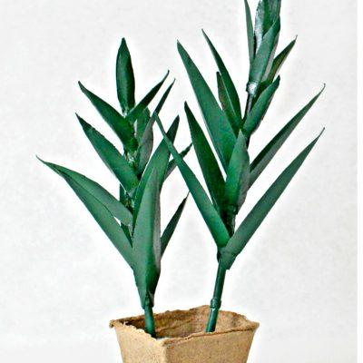DIY Aloe Vera Paper Plant