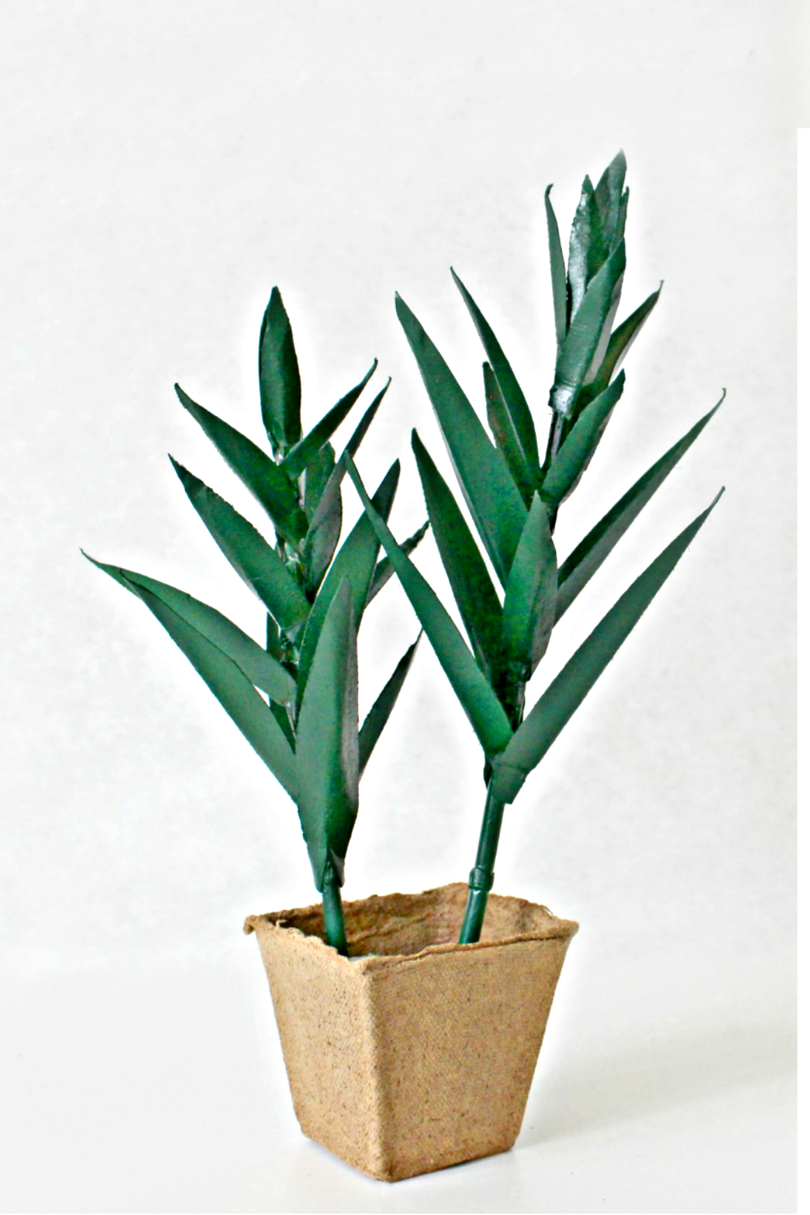 Paper Plant Craft For An Aloe Vera Plant Made With
