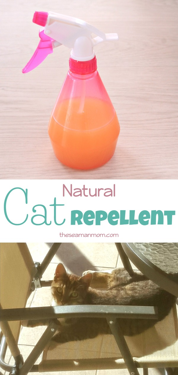Natural cat repellent