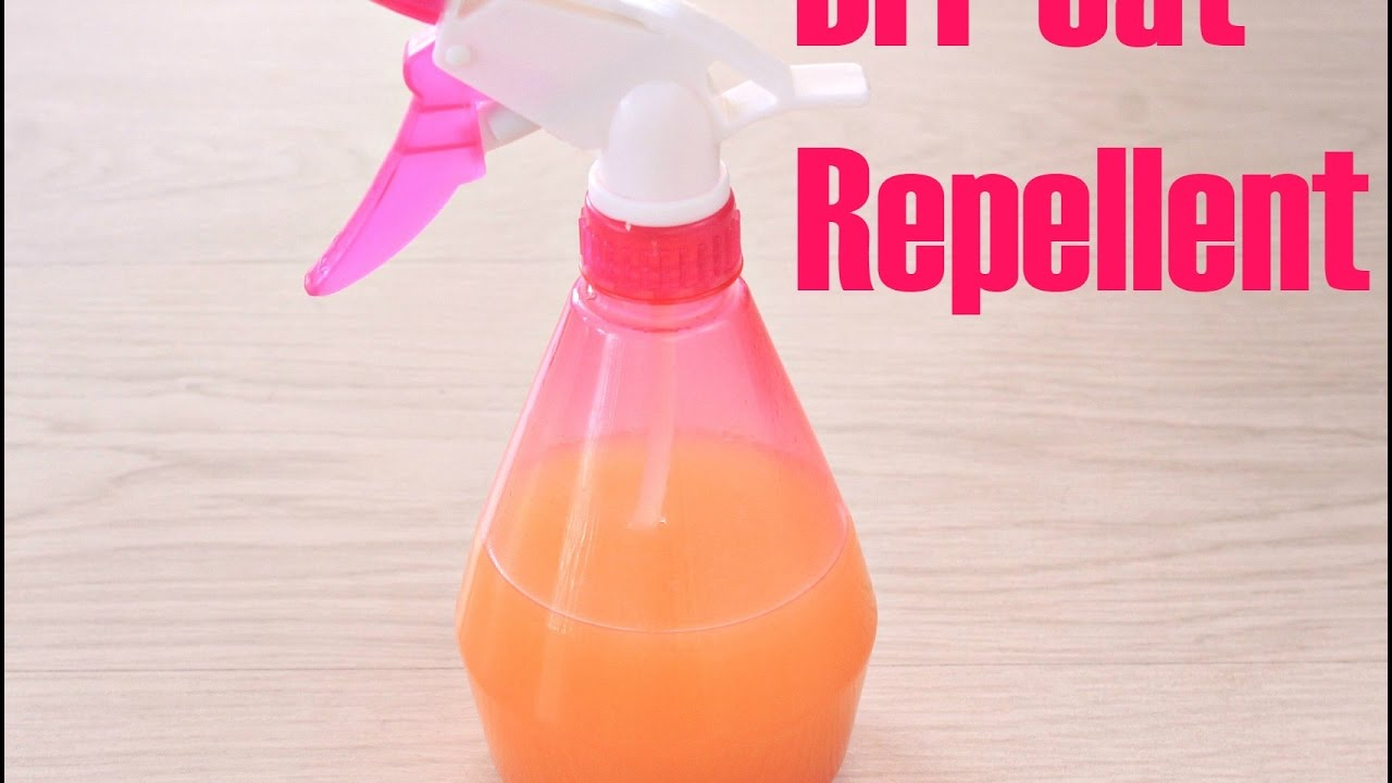 Natural Cat Repellent That Is Safe For Home And Garden