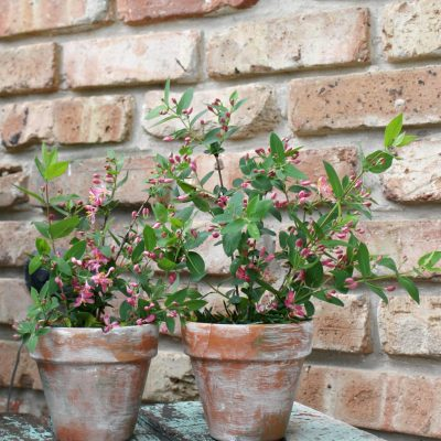 How To Make Your Own Aged Terracotta Pots