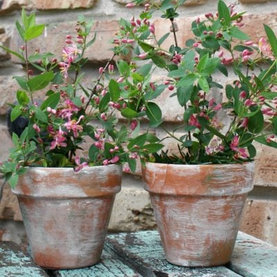 See how easy and quick to make are these adorable aged terracotta pots!
