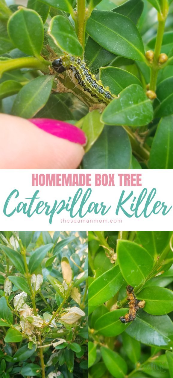 Box tree caterpillar killer