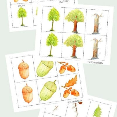 Oak tree life cycle printable pack