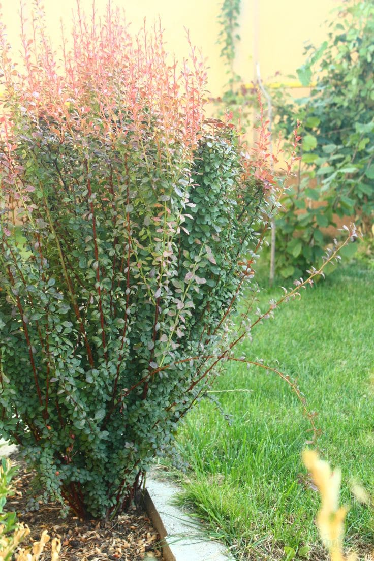 Fall Gardening Tips To Get Your Yard Ready For Winter