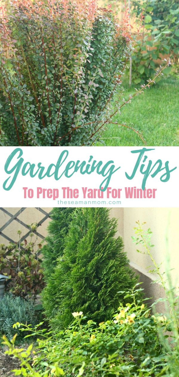 Getting your garden in top shape and ready to face the cold winter days is so easy and simple with these fall gardening tips! Here are all the fall garden chores you should do right now to get your garden ready! via @petroneagu