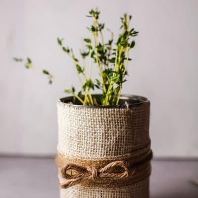 DIY herb pot from recycled tin can